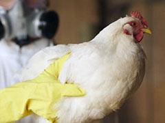 Памяткапо профилактике гриппа птиц