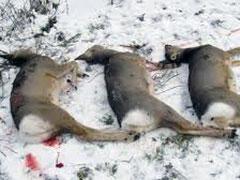 Возбуждено уголовное дело по факту незаконной охоты