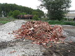 Памятка населению по утилизации биологических отходов